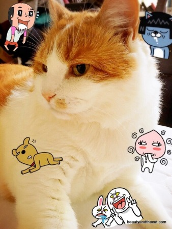 04-beautyandthecat-roxy