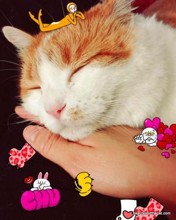 06-beautyandthecat-roxy