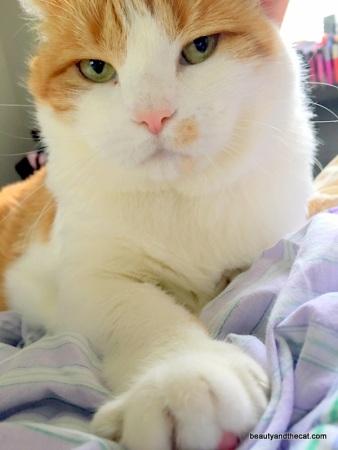 17-beautyandthecat-roxy